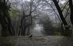 fog (photoksenia) Tags: ukraine odessa park panasonic dmcgm5 tree autumn fog bird nature