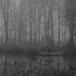 Nebel thumbnail