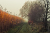Foggy Eifel (Netsrak) Tags: baum eifel europa europe herbst landschaft natur nebel wald autumn fall fog landscape mist nature woods bäume