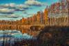 (Topolino70) Tags: canon 600d bird pond lintuallas fall autumn ruska syksy water tree cloud sky grass espoo suomi finland