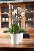 Artstone Claire White (IvylineGB) Tags: buitengoed laren potten tersteegesfeer
