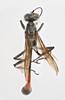 Ammophila procera Dahlbom, 1843 (Biological Museum, Lund University: Entomology) Tags: hymenoptera dahlbom sphecidae ammophila procera mzlutype05743 taxonomy:binomial=ammophilaprocera