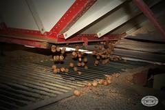 0048BAR Almond17 by BAYAREA ROADSTERS
