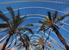Umbracle (ohank1951) Tags: lines curves bluesky blue palmtrees umbracle arboretum cityofartsandscience ciudaddelasartesyciencias cac calatrava valencia spanje spain canoneos80d efs1022mmf3545usm