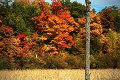 Autumn-Tree-W (RickLev) Tags: 5d autumn canada canon colorful fall levesque light markii ontario ottawa picture rick trees beautiful color image valley