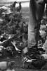 Stepping-in (Ivona & Eli) Tags: israel tlv urban street pavement flock leg human man pigeon birds bw monochrome