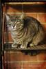 (Monica Muzzioli) Tags: cat sun light bricks texture grey