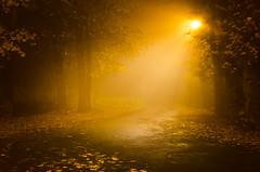 Fog in the city (Koberek@) Tags: sulików koberek nikond5100 18105 light lower śląsk poland dolnyśląsk autumn fog silesia outdoor polska nature night