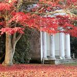 The Temple thumbnail