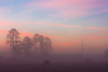 Foggy sunrise (Riddhish Chakraborty) Tags: ga georgia usa sunrise dense fog bovine farm cows nature outdoor landsacpe sky tree silhouette