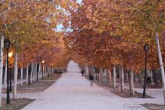 Paseando por la arboleda (cienfuegos84) Tags: autum otoño punto de fuga parque naturaleza