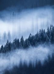 Pacific Mists (davebrosha) Tags: davebroshaphotography bc britishcolumbia coast landscape nature northwest pacific stock tofino ucluelet west fannybay canada ca