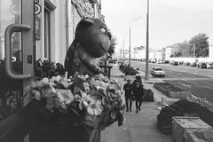 «Cats Vasey Lozhkina» (Andrey  B. Barhatov) Tags: russia moscow streets noiretblanc blackandwhite blackandwhiteonly noir bnwmood bnwfilm bnw bw bwfp bnwdark ru streetphoto streetnotes 2017 moscowwalks grain ilfordhp5 ilfordhp5400 kodaks1100xl d76 dark analog filmtype135 film filmfilmforever filmoriginal filmmood filmisnotdead filmphoto filmphotography lomography barhatovcom outdoor outdoors 35mm россия москва улицы город городскиезаметки пленка фотопленка чб чернобелое наблюдатель monochrome monotone sredafilmlab pakonf235 васяложкин vasyalozhkin