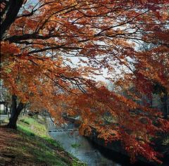 居られますように。誰かの、光で。 (aozora.umikaze) Tags: japan kyoto aozoranoiro hasselblad film