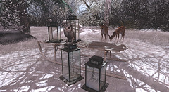 BVN Field Trip – Harleys2joker (нαяlєy Qυiии) Tags: secondlife deciduous bvnfieldtrip winter