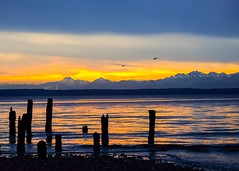 Olympic Mountains (otterdrivernw) Tags: fujinon xf50140 xt2 fujix fujifilm fuji water gold yellow blue beach beaches pilings olympic mountains pugetsound sea sunrise sunset