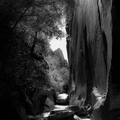 In Canyons 140 (noahbw) Tags: d5000 dof hiddencanyon nikon utah zionnationalpark autumn blur canyon cliffs depthoffield desert erosion landscape mountain natural noahbw path rock sky slotcanyon square stone trees cloudsskiesandsuch incanyons
