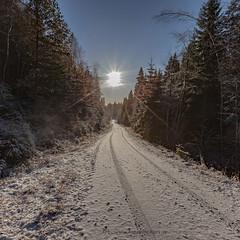 20171115003571 (koppomcolors) Tags: koppomcolors vinter winter värmland varmland skog forest snö snow