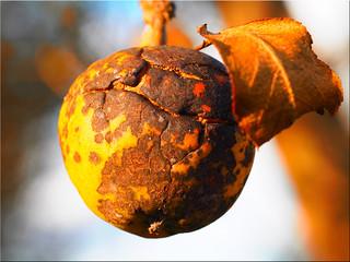 Late autumn fruit