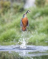 Double Catch (simon.mccabe.5) Tags: simonmccabe bird motion flight splash uk nature water blue fishing kingfisher