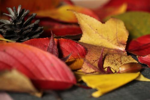 落ち葉のコラージュ