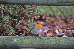 IMG_0835 (jaybluejeans94) Tags: animal animals nature chester zoo chesterzoo bird birds