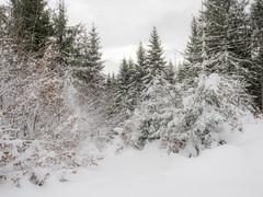 PC080039 (turbok) Tags: berge landschaft schnee stimmungen winter c kurt krimberger