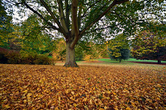 Amidst the fall  -  (Selected by GETTY IMAGES) (DESPITE STRAIGHT LINES) Tags: november season autumn nikon d7200 nikond7200 paulwilliams despitestraightlines flickr morning am nature mothernature naturalbeauty beauty tree trees wood woodlands forest leaves fallenleaves winter branch branches bark wet park camerpark bexleyheath kent bexleyheathkent parkland parklife grass landscape sigmawideanglelens sigma816mm sigma816mmf4556 getty gettyimages gettyimagesesp despitestraightlinesatgettyimages paulwilliamsatgettyimages lesnesabbeywoods lesnesabbey abbeywoods sigmalens sigma816mmonnikond72200 ultrawideanglelens