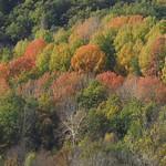 Autumn at Pyrenees thumbnail