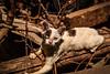 Gato (PALA1991) Tags: gato cat gatos guayas guayaquil quito ecuador nikond5500 ambient portrait vintage tumbrl animal