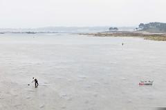 Mariscadores en a Illa da Arousa (Jose M. Peral) Tags: agua almejas bajamar composición españa exterior galicia gaviotas gris isla latoja mar marea marino mariscador marisco neblina nublado ogrove pesca pontevedra primavera ria
