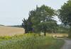 Campo de girasoles en la región de Languedoc-Roussillon, sur de Francia (Edgardo W. Olivera) Tags: girasol tree road camino sky landscape languedocroussillon occitania france francia europe europa panasonic lumix gh3 edgardowolivera microfourthirds microcuatrotercios sunflower