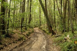 Forêt dans le Vexin Français
