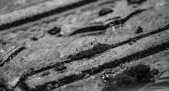 Pascal Bonnet - Comme à Gravelotte (shynyphotographe) Tags: pluie toit exterieur noirblanc blackwhite gouttedeau h2o