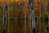 All Shall Fade (SunnyDazzled) Tags: autumn leaves fall foliage reflections water lake evening sunlight sunset colorful deadtrees dead trees forest hillside far shore longpondironworks newjersey nature landscape longexposure