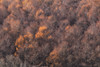 Fleeting Gold (jasohill) Tags: autumn october color nature mountains iwate red trees 2017 hachimantai forest photography life colors fall colorful landscape japan golden