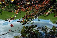 Outono chegando... (Ruby Ferreira ®) Tags: campinassp branches reflection reflexos lake lago parque erytrinaflower flôrdecoral park clouds nuvens galhos