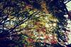 _Y030105 (YusiYi) Tags: 高尾山 flicker pics japan photo photographylovers colorusphoto colorful 日常 今日 生活 景色 日常風景 love 道 street outdoor tree plants sky blue yellow 光 light