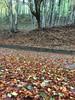 Location d'autunno. (esterinaeliseo1) Tags: strada calabria colori autunno alberi foglie sottobosco montagna