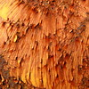 chapped (vertblu) Tags: rust rusty oxidation ironoxide ferricoxide ferrousoxide orange yellow brown earthycolours colourful colours lines linien line chapped 500x500 bsquare kwadrat abstract abstrakt abstraction abstractsquared abstracted burst paint peelingpaint oldpaint demolitioncontainer damage damaged coated coating scratches scratch iron texture texturesquared textur textures rustyscratches rustpatterns pattern patterns patterning patterned container warmcolours burstpaint burstcoating varnish vertblu ferric redbrown anglesanglesangles graphical graphic makro macro macromode