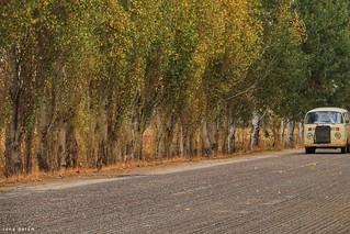 Ammik #lebanon #road #autumn #beautiful #nature_photography #photo_art #photooftheday