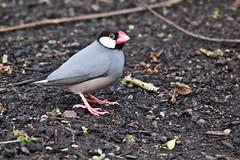 IMG_0860 (jaybluejeans94) Tags: animal animals nature chester zoo chesterzoo bird birds