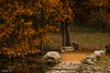 Follow the path (Irina1010) Tags: path stones pond cypress trees forest autumn nature canon outstandingromanianphotographers ngc npc