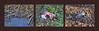 """Hitchcock """"The Birds""""? - International Day for the Elimination of Violence against Women. Walk alongside Danube Unterwegs entlang der Donau Spaziergang auf der Donauinsel an einem sonnigen Herbsttag. Vor, nach sowie anläßlich: Tag gegen Gewalt an Frauen (hedbavny) Tags: ferien feiertag leopold heiligerleopold leopoldi ausflug outing unterwegs donau danube donauinsel spielplatz vogel bird pigeon taube dove krimi crimesceneinvestigation spur schuh frauenschuh stöckelschuh shoe highheels stiletto schwarz black tuch küchenrolle towel papier paper bloody blut blutrot red rot wasser water blau blue green grün braun brown weis white holz wood ufer flus river biberdamm beaverdam laub blätter herbst autumn fall herbstlaub death tot leiche corps spiegelung reflection mirror wien vienna austria österreich ingridhedbavny hedbavny"""