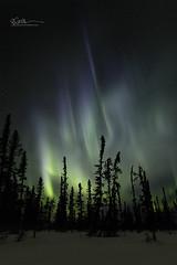 _64A1553 (Ed Boudreau) Tags: alaska northernlights auroraborealis nightphotography nightsky stars aurora winter winterscene winterscape landscape alaskalandscape landscapephotography auroratrapperscreek petersvillerd auroracolors