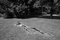 Guiseppe Penone, Munster (bm^) Tags: art city reportage munster noordrijnwestfalen duitsland skulptur 17 sculpture beeld kunst expo documenta 14 documenta14 contemporary sculptuur zeiss d700 nikond700 nikon distagon282zf начинизавиждане distagont228 tree trees boom bomen portrait guiseppe penone