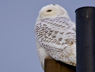 Hedwig finds a new home