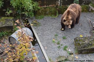 Bern's Bear Pit (Bärengraben)