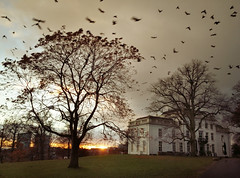 Arnhem, Witte villa (*JW*) Tags: arnhem