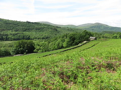 """Lake District, England • <a style=""""font-size:0.8em;"""" href=""""http://www.flickr.com/photos/136447376@N03/38010378385/"""" target=""""_blank"""">View on Flickr</a>"""